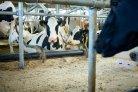 Effect van het frequent mixen van mest op emissies_veehouderijenklimaat