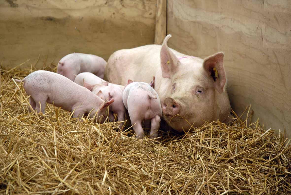 Animal genomics - WUR