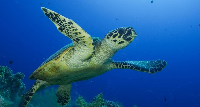Internship: What are the threats for sea turtle foraging and nesting habitats in the Dutch Caribbean?