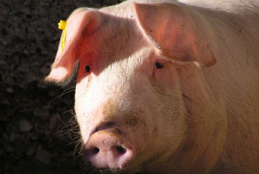 Waarderingsnormen varkenshouderij