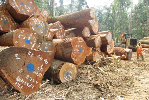 wood logging in Cameroon