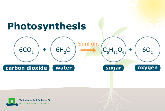 Diagram Formule Photosynthesis process