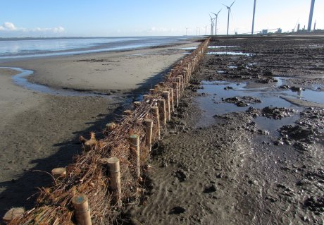 Nature-based salt marsh development in the port of Delfzijl