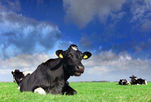 Progesteronmeting in melk bruikbaar hulpmiddel bij fokwaardeschatting voor vruchtbaarheid