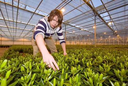worker in a glasshouse