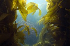 Seaweed and natural capital