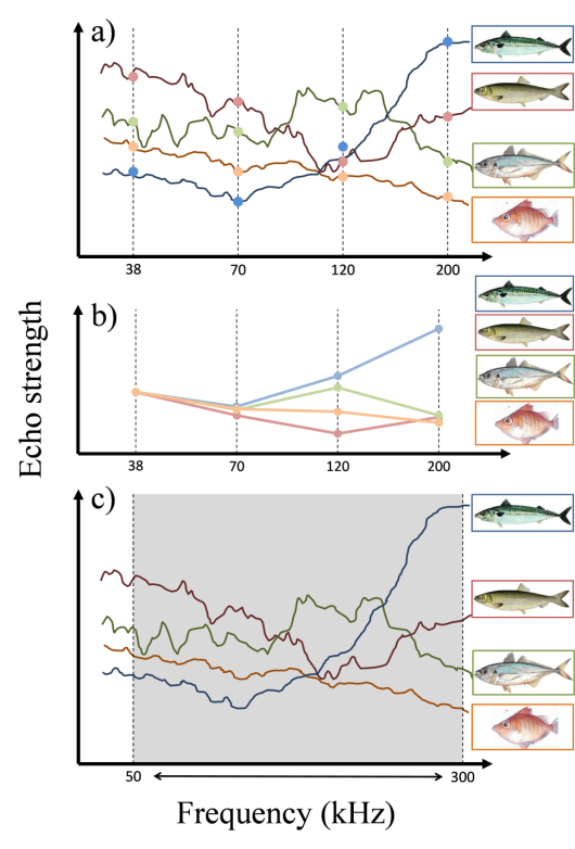 Figure 2. Schematic description of frequency-specific identification properties of different fish species. a) Echo strength of the fish species (solid lines) and measurements taken at four distinct frequencies (filled circles) (mackerel: blue; herring: red; horse mackerel: green; boarfish: orange). b) Multi-frequency echo characteristics of the species used for identification algorithms. c) Broadband technique covering a wide frequency band (e.g. 50-300 kHz) and measuring ehco strengths of the species at essentially 250 individual frequencies.