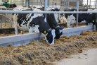 Koeien & Kansen veehouders scoren goed op duurzaamheid
