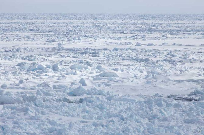Large stretches of sea ice that had to be crossed were heavily rafted floes with accumulated ice layers.