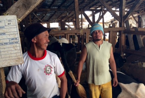 Sustainable Intensification of Dairy Production Indonesia