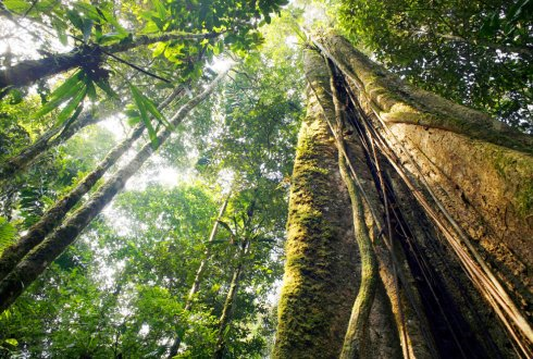 Interactive community-based tropical forest monitoring using emerging technologies