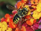 Warning from European Academies of Science about implications of neonicotinoid use