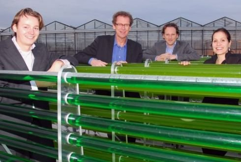 Sustainable aviation fuels from algae