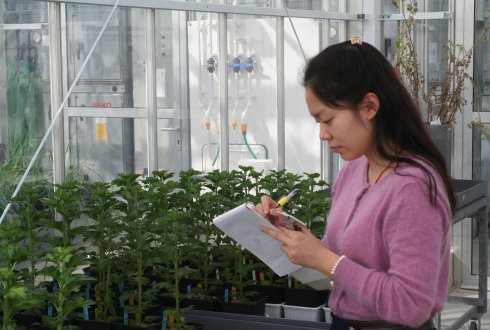 Industry, fundamental-, and applied research join forces to increase resilience of cut flowers