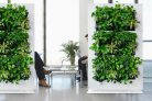 Plants for a good interior climate