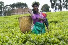 Social innovation for nutrition-sensitive and sustainable agricultural development pathways.