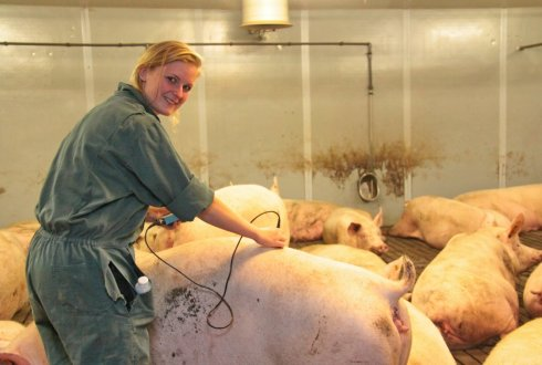 EU PIG - Europe-wide network aiming to improve the pig industry