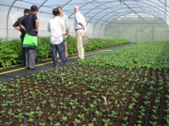 Plastic tunnels with potato selections at PRI, Wageningen