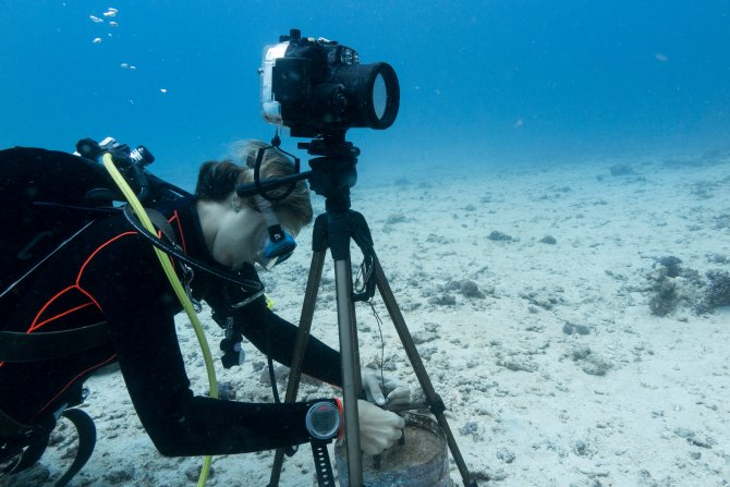 Quantifying predation on coral colonies