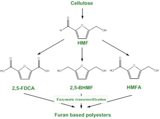 Figure 1 Cellulose-containing biomass can be degraded to sugars and HMF. HMF in his turn can be enzymatically reduced or oxidized to 2,5-furandicarboxylic acid (2,5-FDCA), 2,5-bishydroxymethylfuran (2,5-BHMF) or hydroxymethylfurancarboxylic acid (HMFA), which can all serve as building block for furan based bioplastics.