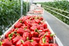 Dutch export of agricultural products exceeds € 90 billion in 2018