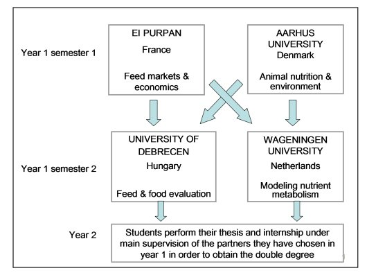 Doctoral thesis structure