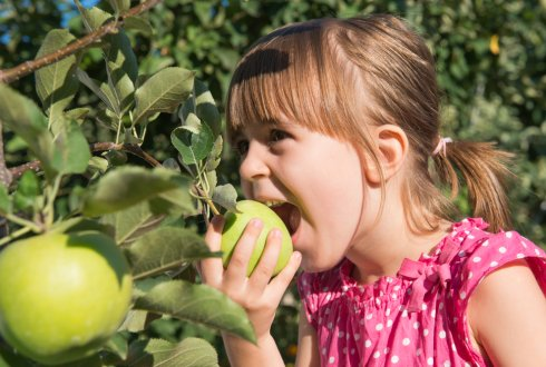 Prijsindicaties groente en fruit
