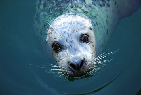 Seals in motion. How movements drive population development of harbour seals and grey seals in the North Sea