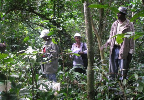 Climate resilient wild coffee populations with high flavour potential unveiled in Uganda's threatened forests
