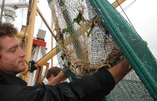 For the Knowledge Network on Fisheries, Pieke Molenaar of Wageningen Marine Research investigated the working of the so-called sieving web on board the shrimp fisher ZK1. The sieving web could be an alternative to the mandatory separator trawl, a panel in the net that prevents unwanted bycatches to leave the net. Test results will have to indicate whether the nets function with similar efficiency.