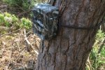 Deployed camera trap