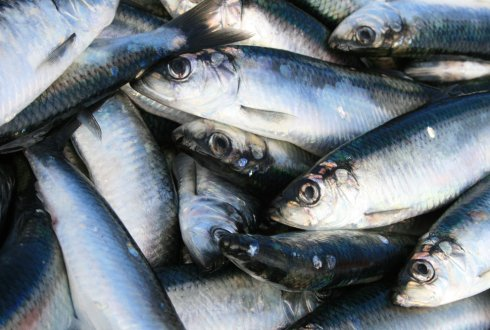 Minerals in fish: does the source matter?