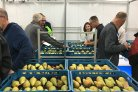 Optimal fruit quality in the chain and for the consumer