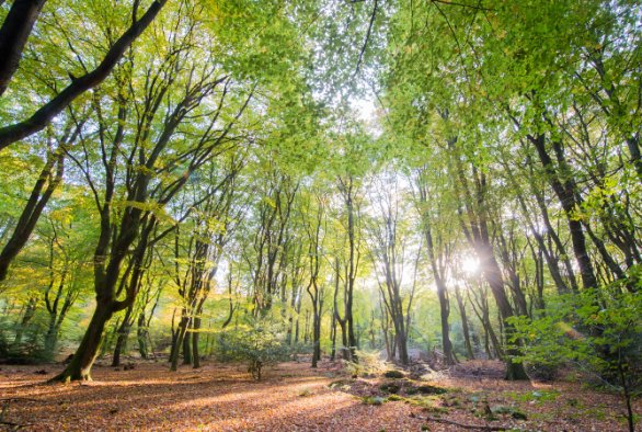 forests, forest, climate, climate change, targets, policy, european