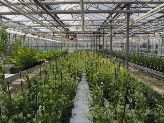 jitpanu greenhouse.JPG