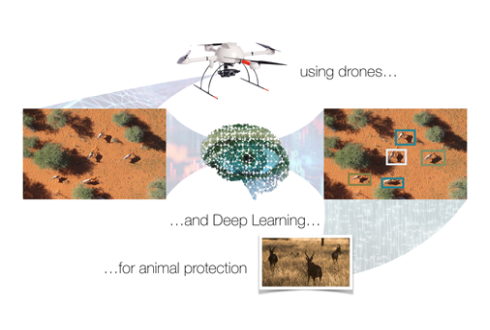 MSc thesis topics: Automated Animal Localisation in Drone Images