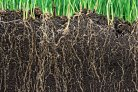 'The Paris soil carbon sequestration goals are unrealistic'