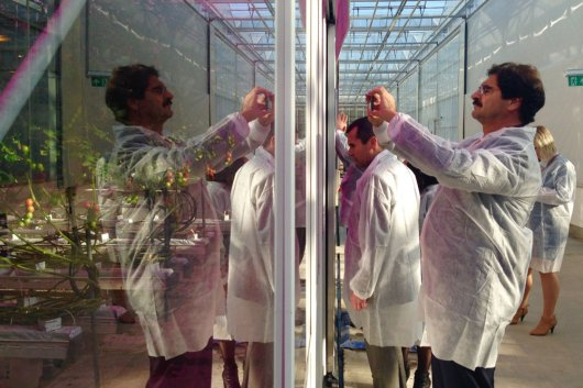 Ing. Leonardo Sarquís taking a picture of a tomato experiment in the greenhouses of WUR in Bleiswijk
