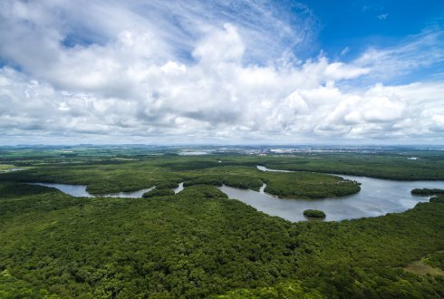 Self-amplified effects of drought exacerbate forest loss in the Amazon
