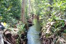 Rewetting Tropical Peatlands