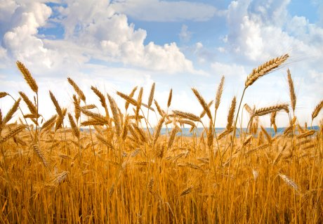 Call for partners: Make your agri-food sourcing strategy more climate resilient