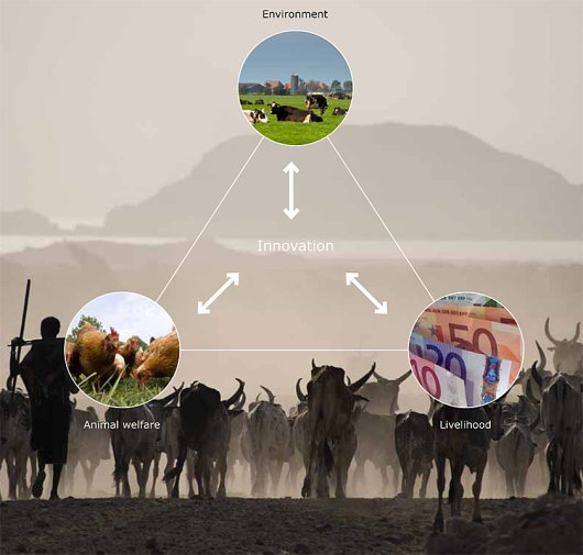 The impact of innovations in livestock systems