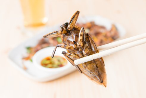 Eating insects: how to convince consumers?