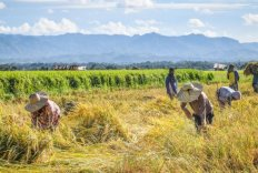 Food farming Resilient and Sustainable Food Systems for a Food-Secure Future