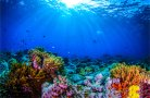 40 years of change on the coral reefs of Curacao and Bonaire