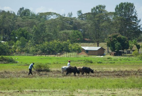 Poor farmers Agricultural and poverty reduction in Ethiopia and Kenya