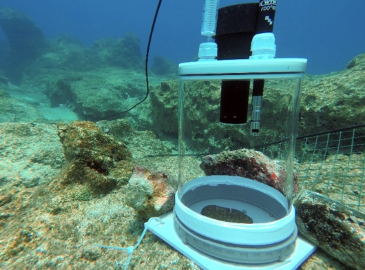 Incubation chamber to measure functional responses of sponges in multi-trophic mariculture systems. Photo: M. Gokalp.