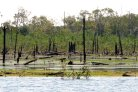 Flammable floodplains are weak spot of Amazon forest