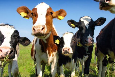 International Symposium on Dairy Cattle Nutrition 2017 - WUR