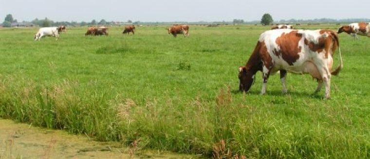 Alle informatie over duurzame melkveehouderij gebundeld voor MBO_ mijnkringloopwijzer